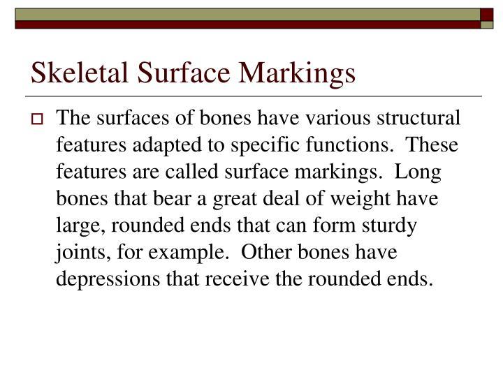 Skeletal Surface Markings