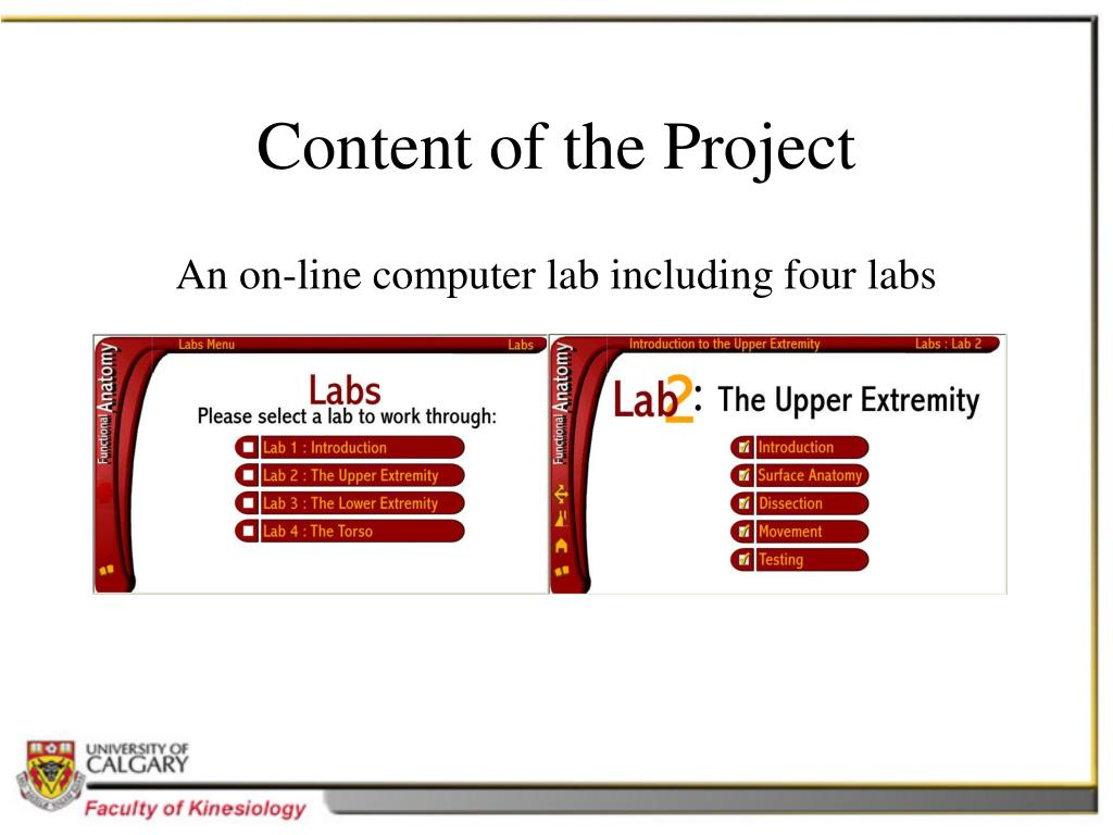 Content of the Project