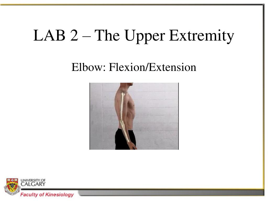 LAB 2 – The Upper Extremity