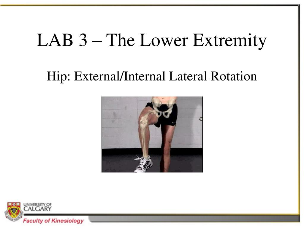 LAB 3 – The Lower Extremity