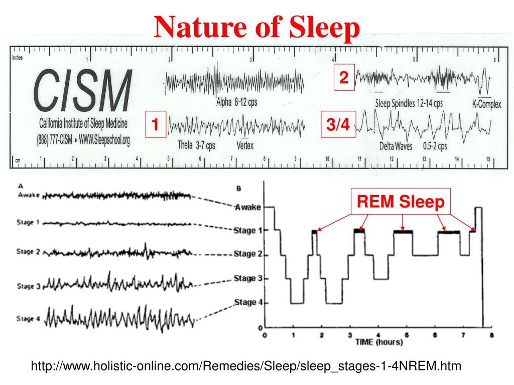 Nature of Sleep