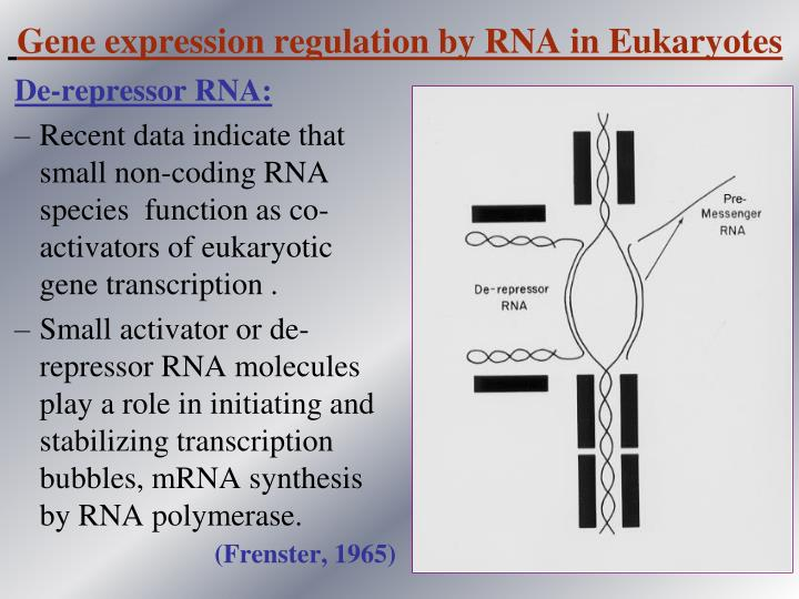 Gene expression regulation by RNA in Eukaryotes