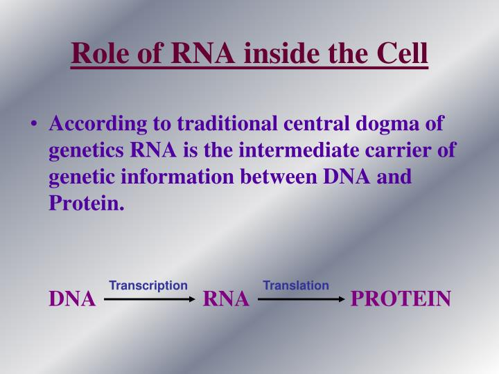 Role of RNA inside the Cell