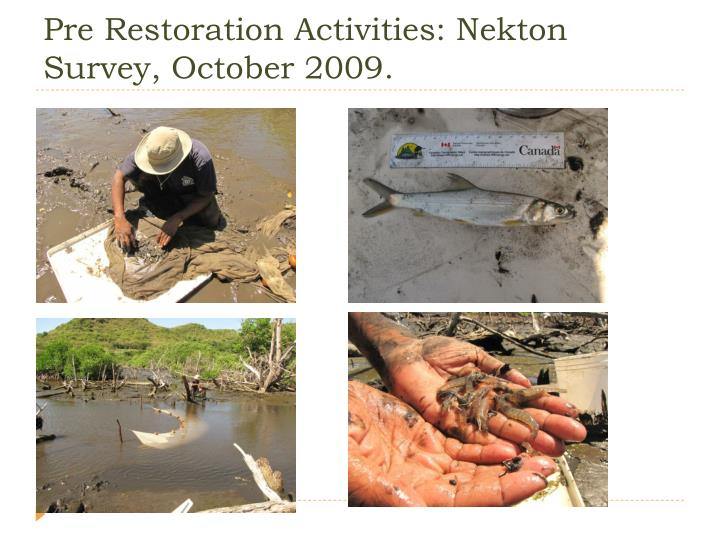 Pre Restoration Activities: Nekton Survey, October 2009.
