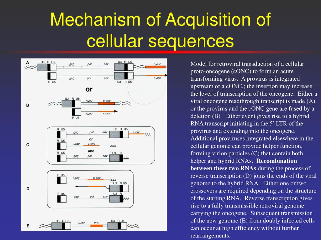 Mechanism of Acquisition of cellular sequences