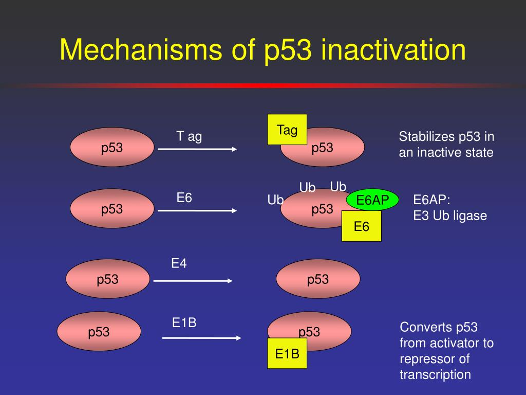 Mechanisms of p53 inactivation