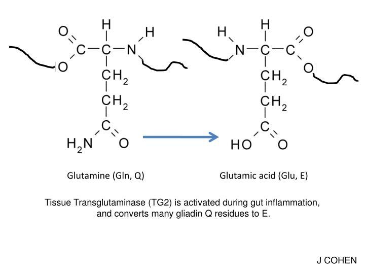 Glutamine (Gln, Q)