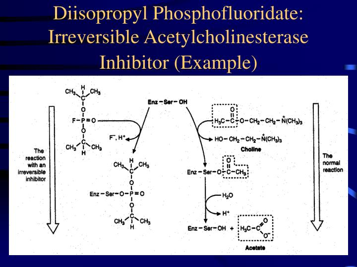 Diisopropyl Phosphofluoridate: Irreversible Acetylcholinesterase Inhibitor (Example)