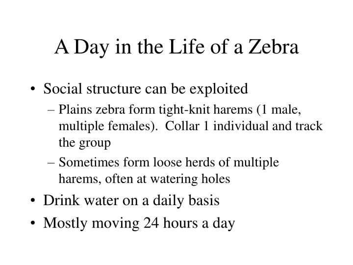 A Day in the Life of a Zebra