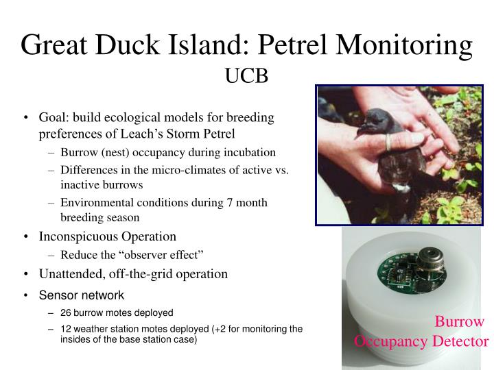 Great duck island petrel monitoring ucb