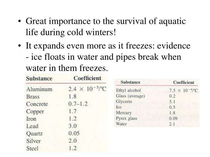 Great importance to the survival of aquatic life during cold winters!