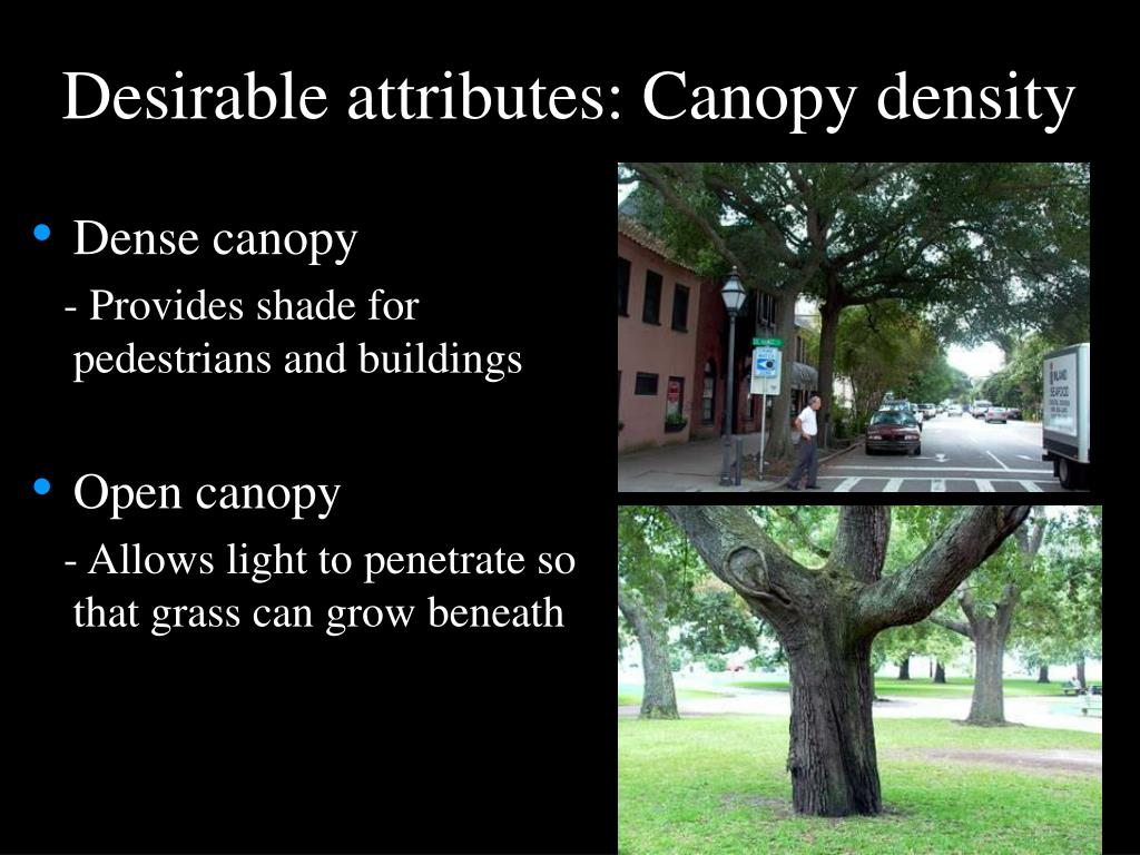 Desirable attributes: Canopy density