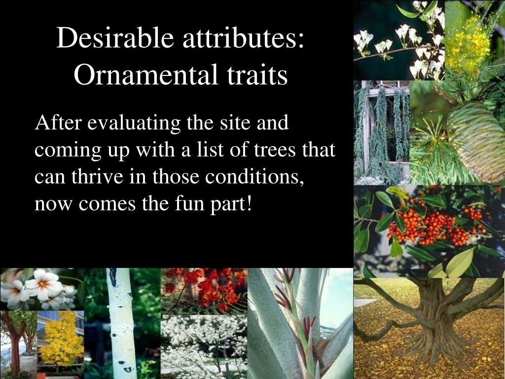 Desirable attributes: