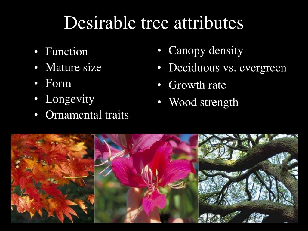 Desirable tree attributes