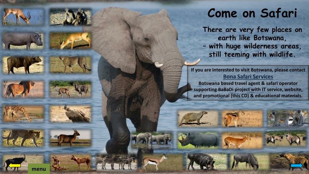 Come on Safari