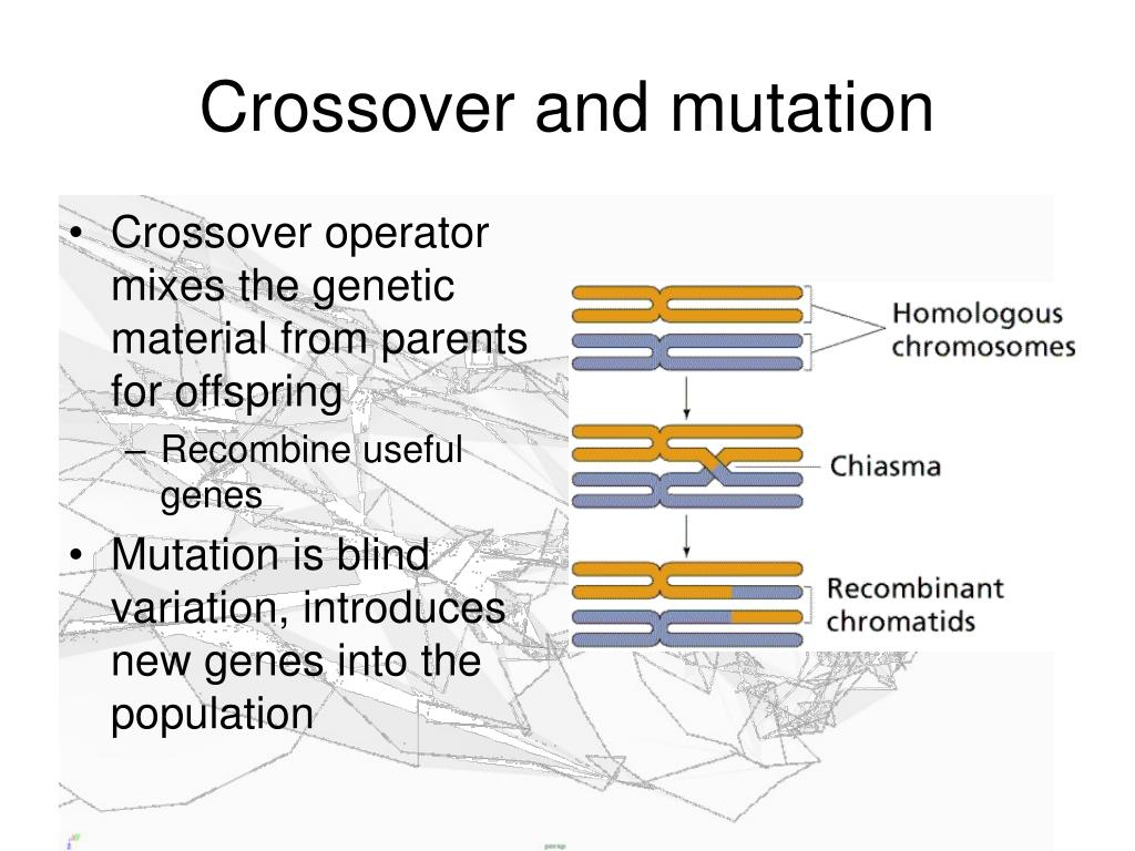 Crossover and mutation