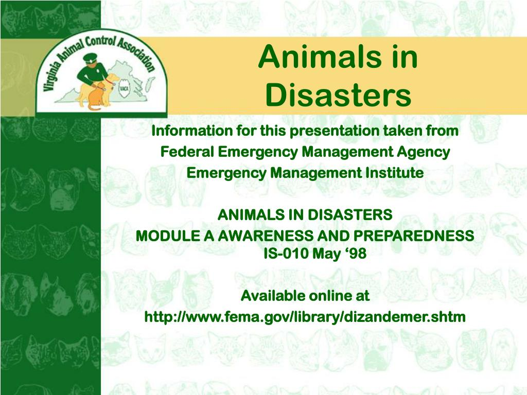 Animals in Disasters