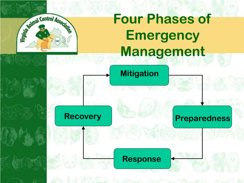 Four Phases of