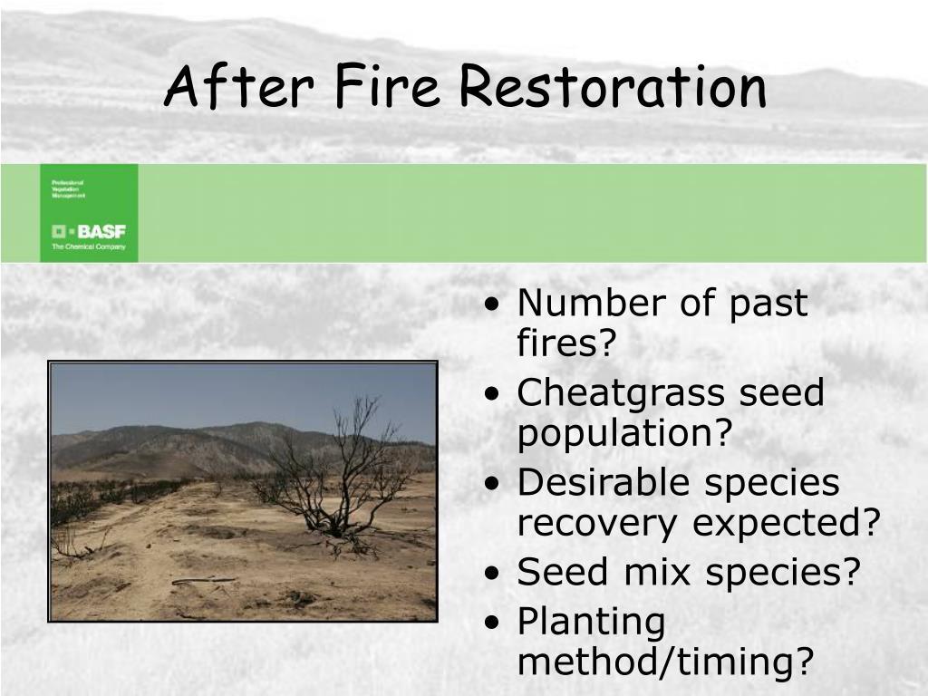 After Fire Restoration