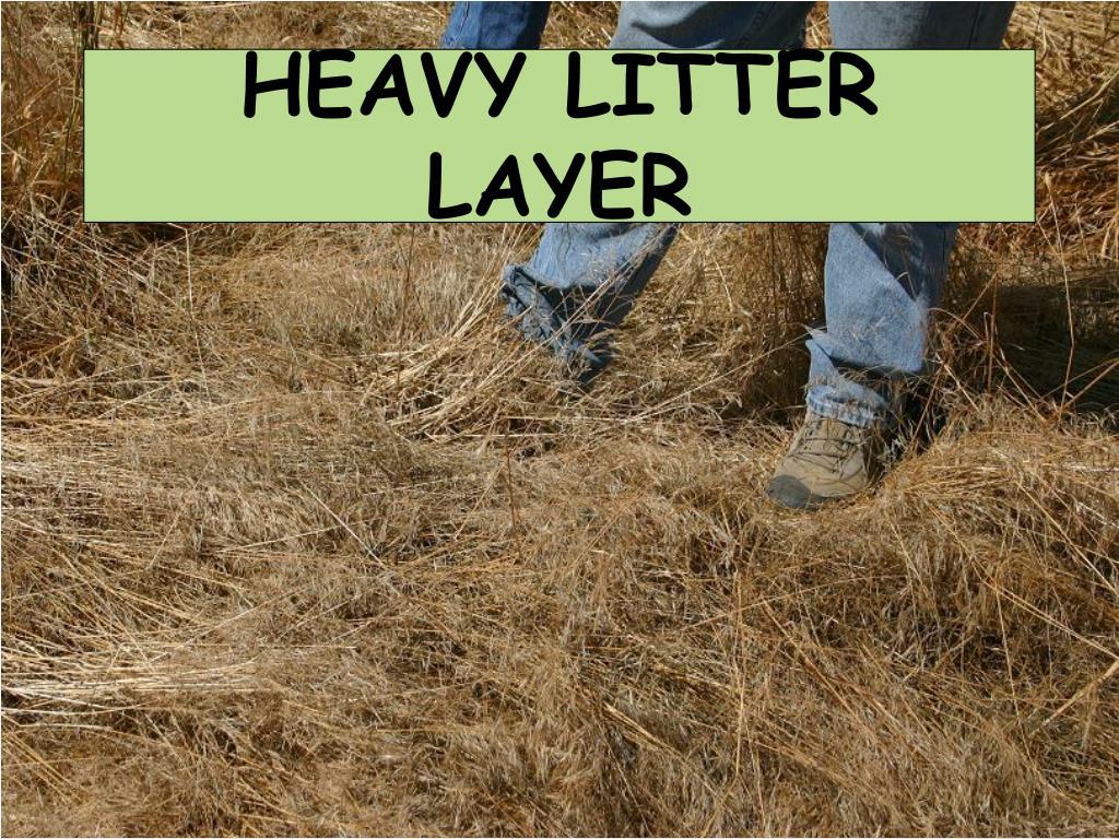 HEAVY LITTER LAYER