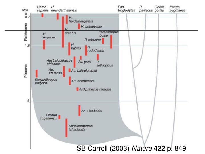 SB Carroll (2003)