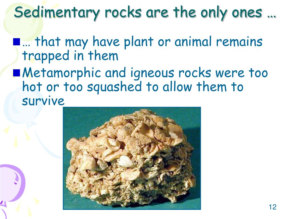 Sedimentary rocks are the only ones …