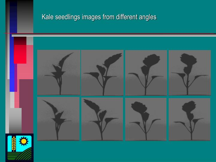 Kale seedlings images from different angles