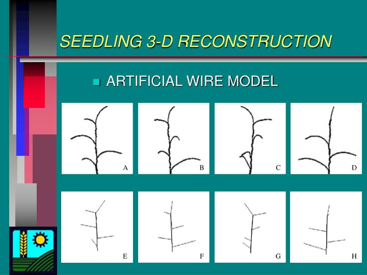 SEEDLING 3-D RECONSTRUCTION