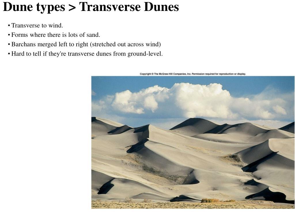 Dune types > Transverse Dunes