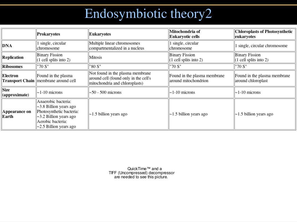 Endosymbiotic theory2