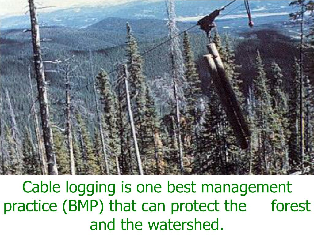 Cable logging is one best management practice (BMP) that can protect the     forest and the watershed.