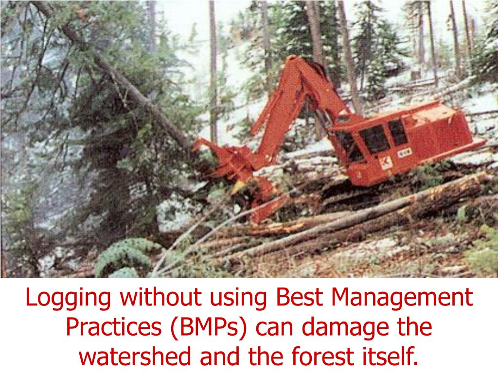 Logging without using Best Management Practices (BMPs) can damage the watershed and the forest itself.