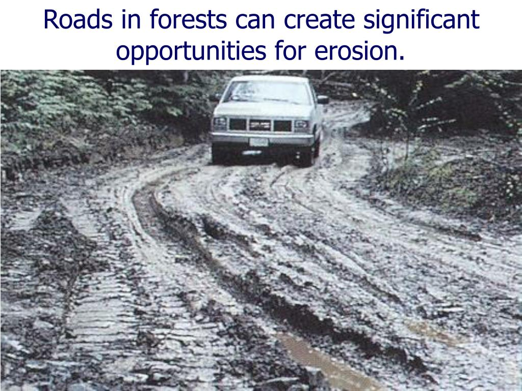 Roads in forests can create significant opportunities for erosion.