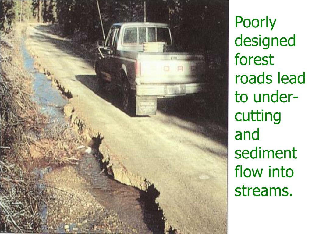 Poorly designed forest roads lead to under- cutting and sediment flow into streams.