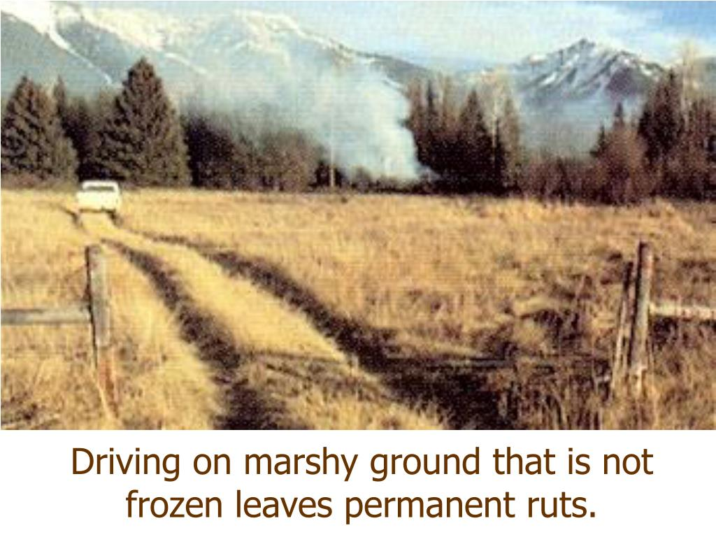 Driving on marshy ground that is not frozen leaves permanent ruts.