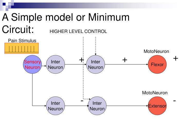 A Simple model or Minimum Circuit: