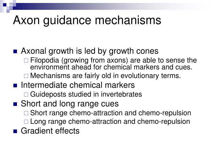 Axon guidance mechanisms