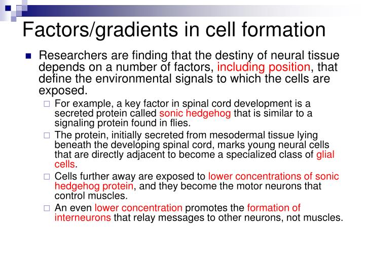 Factors/gradients in cell formation