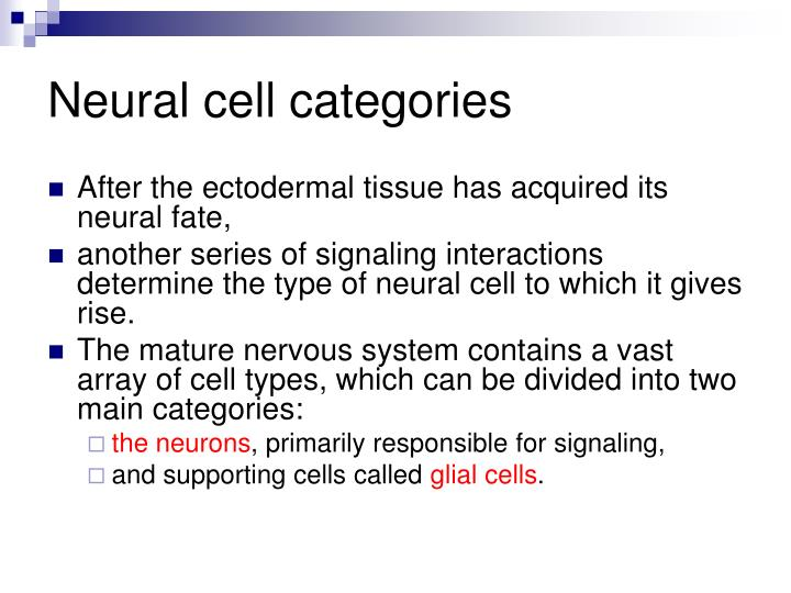 Neural cell categories