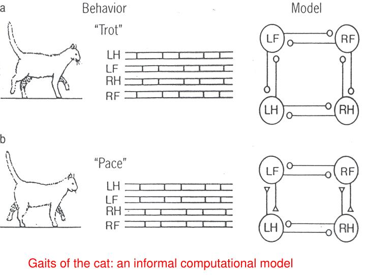 Gaits of the cat: an informal computational model
