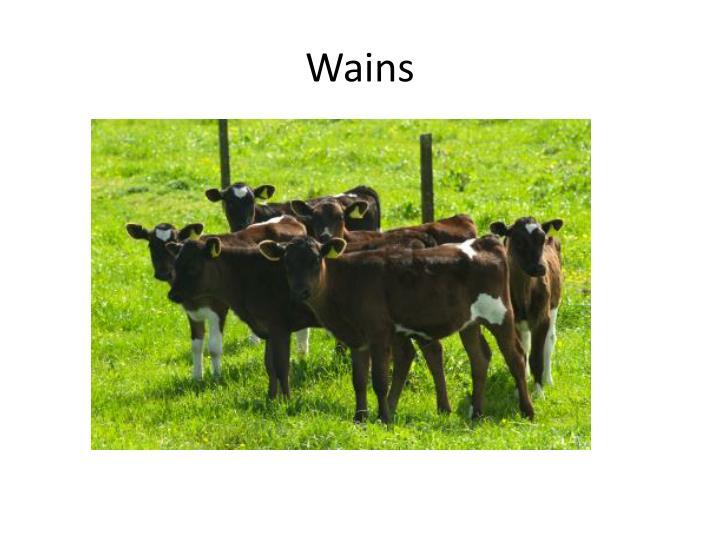 Wains