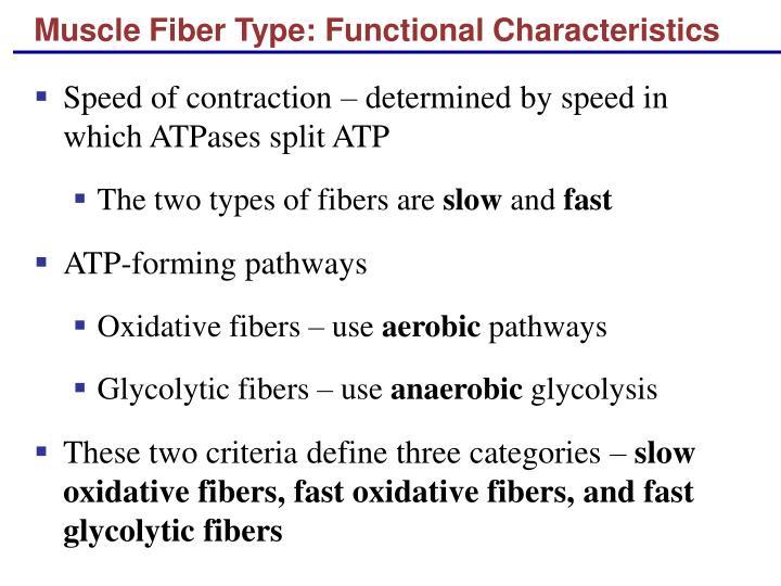 Muscle Fiber Type: Functional Characteristics