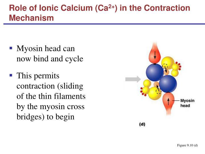 Role of Ionic Calcium (Ca