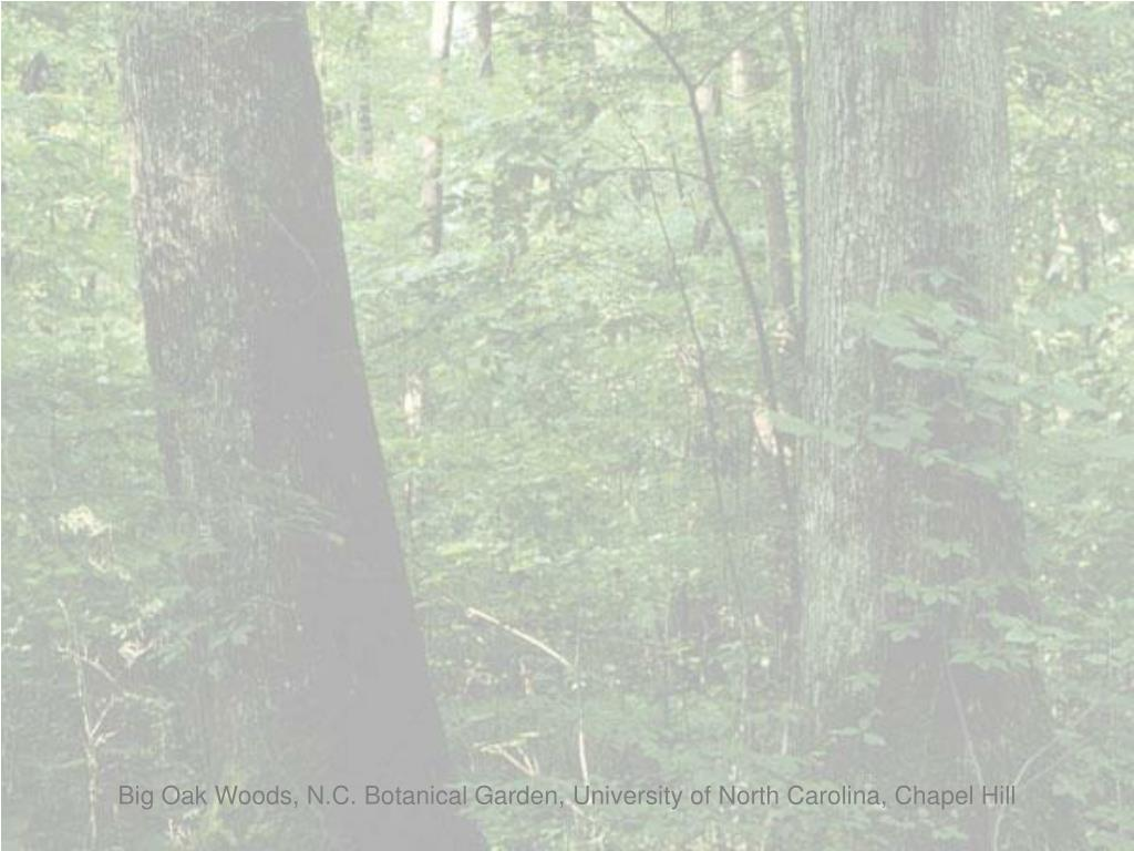 Big Oak Woods, N.C. Botanical Garden, University of North Carolina, Chapel Hill