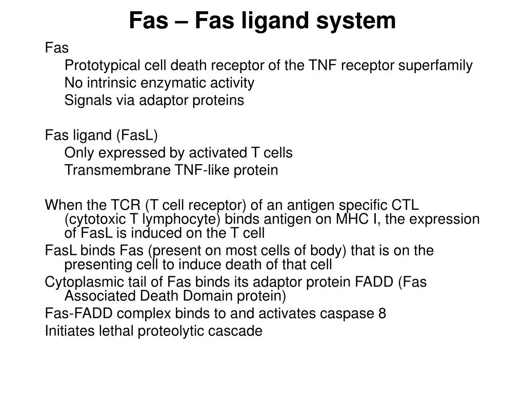 Fas – Fas ligand system