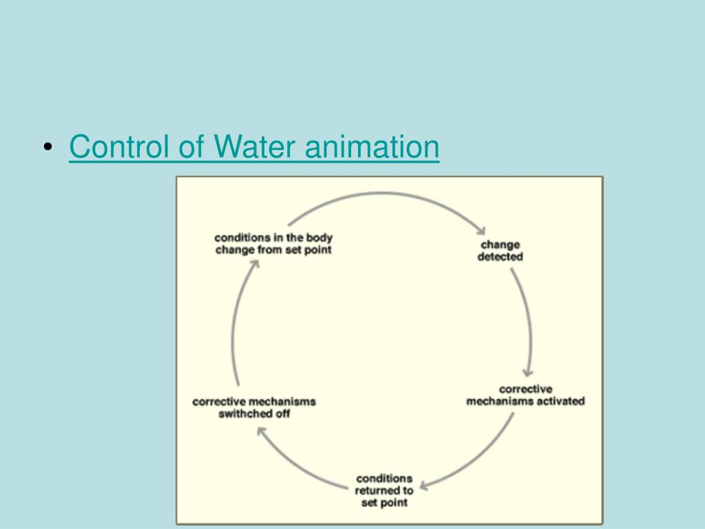 Control of Water animation