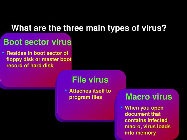 What are the three main types of virus?