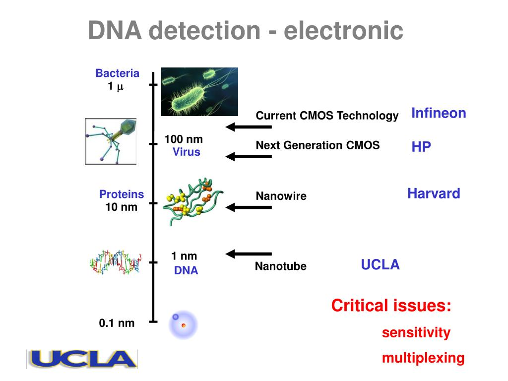 DNA detection - electronic