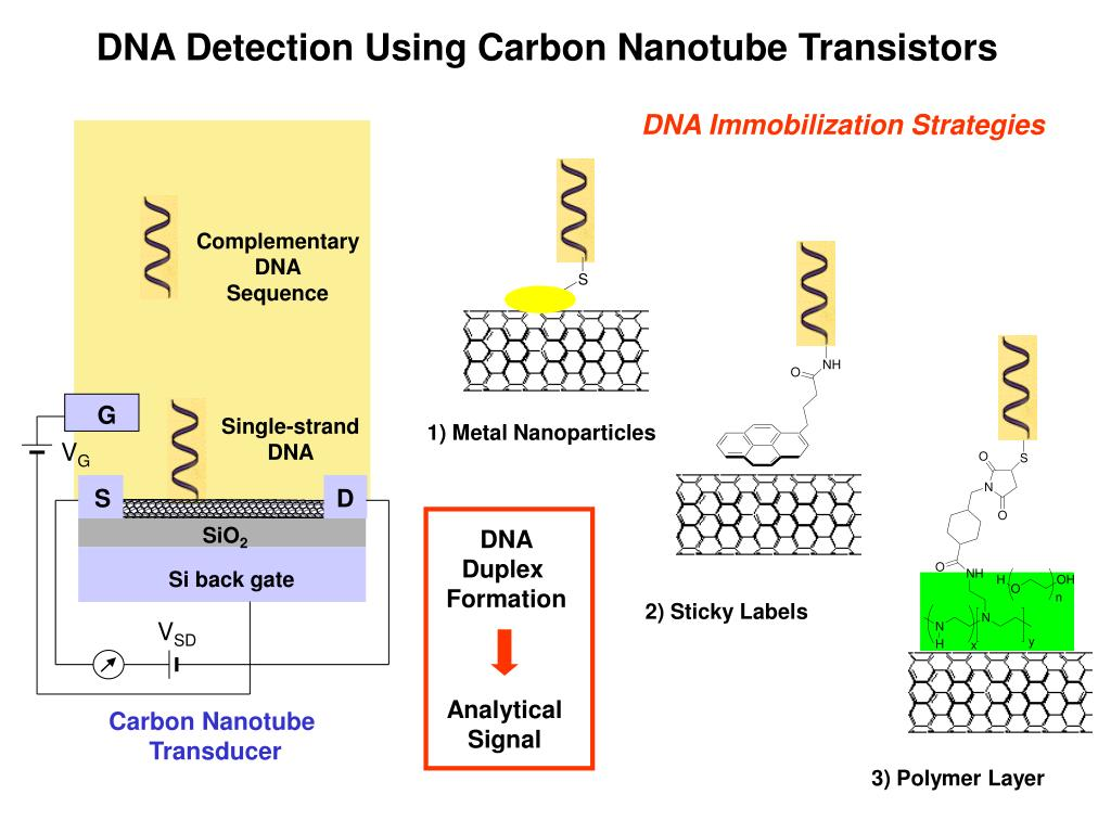 DNA Detection Using Carbon Nanotube Transistors