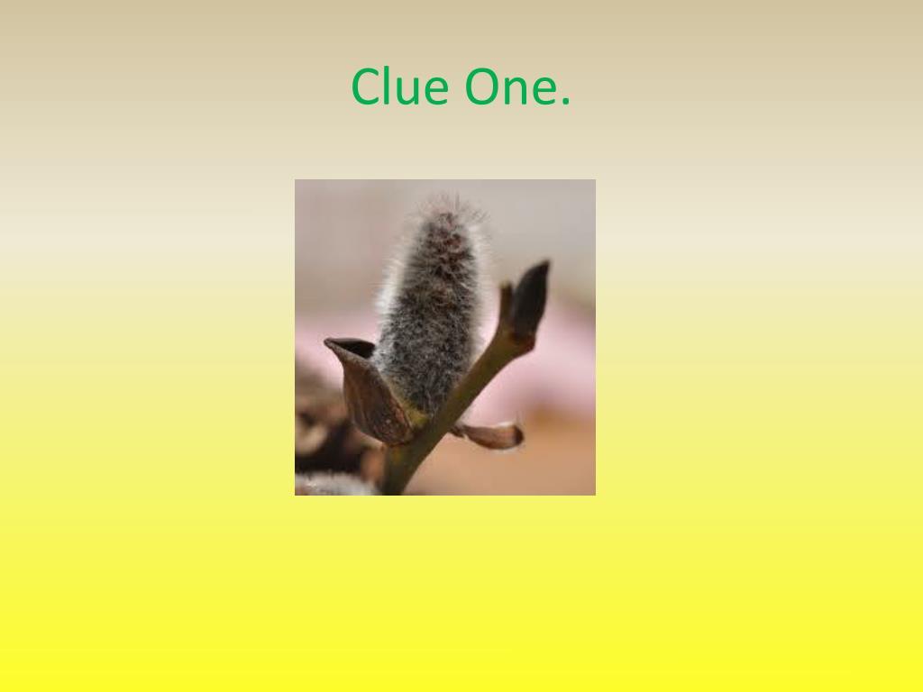 Clue One.